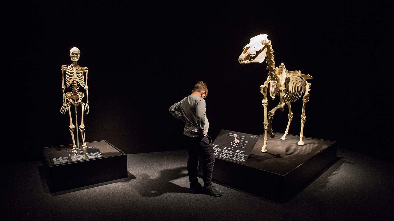 Eläinten Body Worlds –jo yli 100 000 näyttelyvierasta